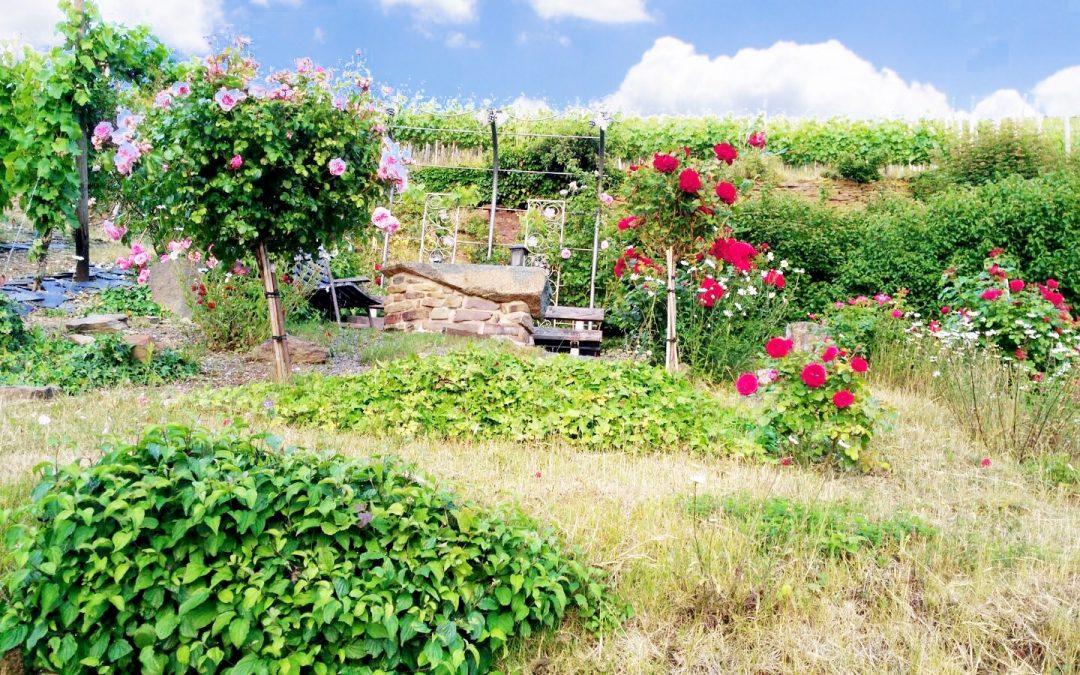 Der Geheimtipp für Ahrtalfans: Wanderung zum Troseblick
